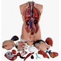 Torso organdocka 85 cm 19 delar