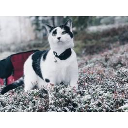 MiniFinder® Atto GPS Tracker till Katt